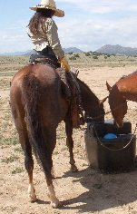 An automatic waterer at the Movie Set was just the ticket!  No carrying buckets, and the horses would much rather drink their own water!