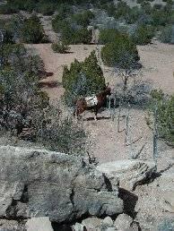 Rhett at the bottom of Cliff Trail