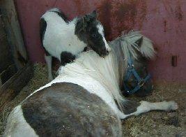 Azul comforting his mama Lacey