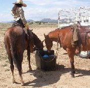 Camping with horses can be fun and easy -- automatic waterer is helpful.   Portable colic cure kits are essential!