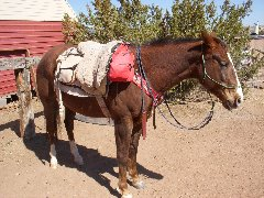 Homemade bareback pad that I made several years ago; it is a work in progress but works very well.  Using a real cinch and latigo allows it to be cinched tight-- added rings for a breast collar.