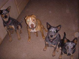 homemade dog treats -- easy to make dog treat recipe, organic dog treats -- our doggies love these homemade treats!
