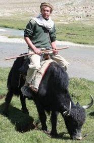 We love our yak, real Tibetan yak.  Amazing salt caravans, pamirs, Afghanistan.  And suggestions for equine colic cure.